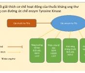 Khả năng ức chế enzym Tyrosine Kinase của các thuốc họ TKIs