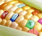 Cây trồng biến đổi gien: những thành tựu và nguy cơ